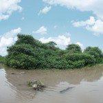Isla Celeste: el triunfo del mangle
