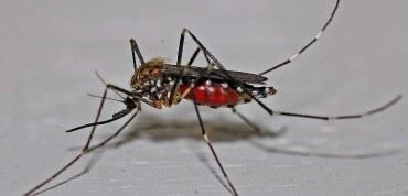 Cómo prevenir la proliferación de mosquitos
