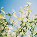 Seis mil familias plantan árboles para [cambiar el mundo] en La Joya