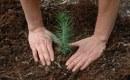 Plantar árboles nos hace felices (y en Villa del Rey lo saben)