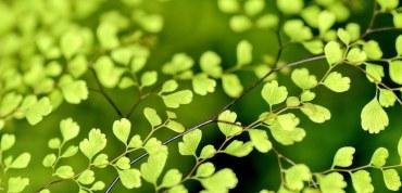 El Plan Verde de La Joya