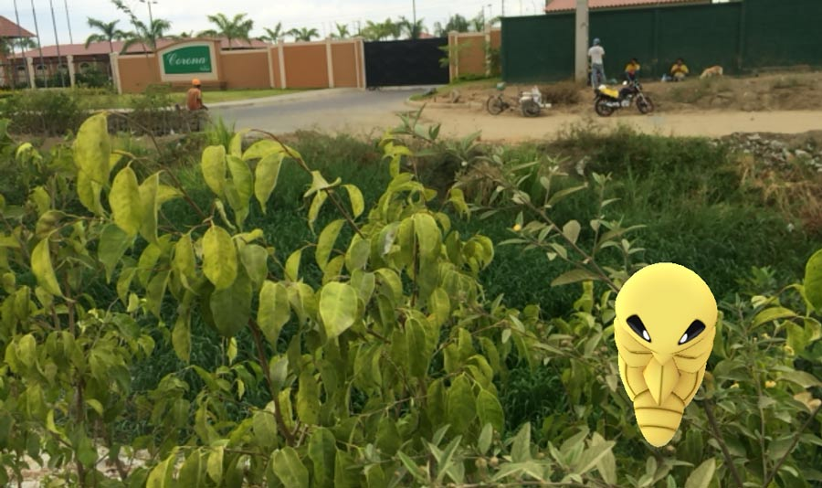 Un safari pokemon en La Joya