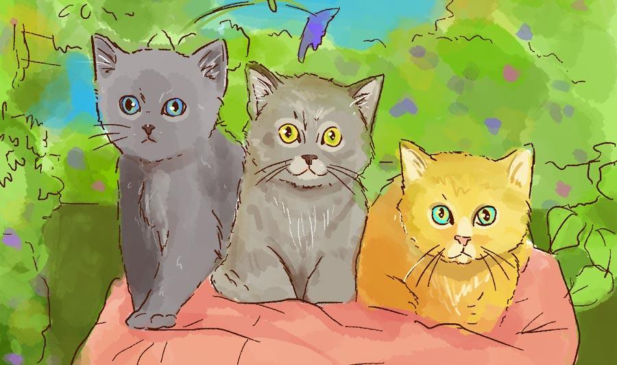 Una solución para los gatos callejeros