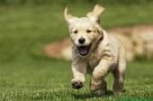 Correr libres, sin correas: el sueño de todo perro ahora es posible en Doral
