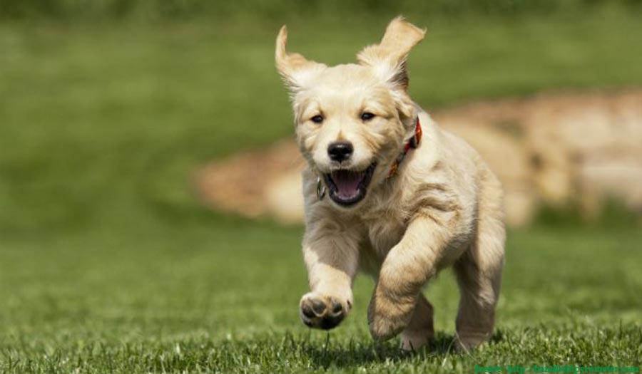 ¿Cuál es el primer parque canino de Villa Club?