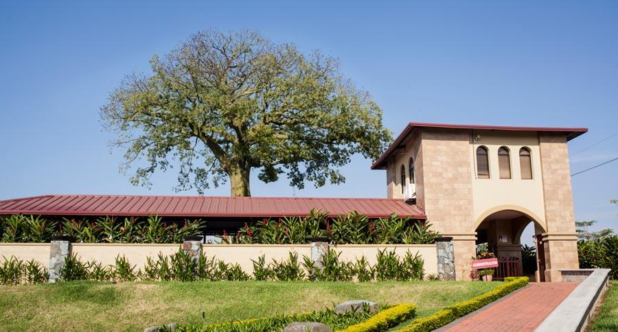 ¿Qué nos dice el árbol centenario de Villa del Rey?